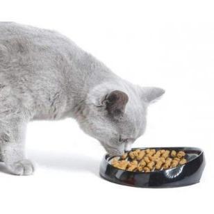 Аристократичний вихованець, або чим годувати британських кішок