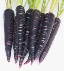 Чорна морква: стародавня, корисна, смачна