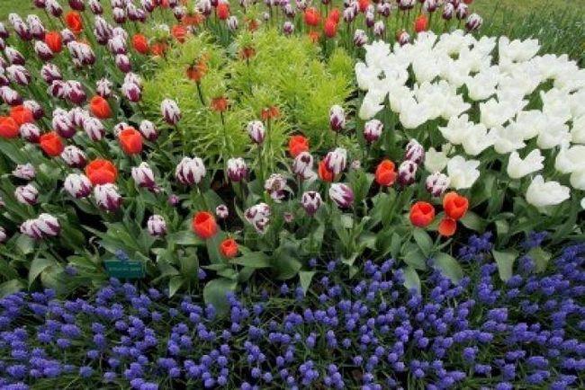 Квіти на дачі з весни і до пізньої осені