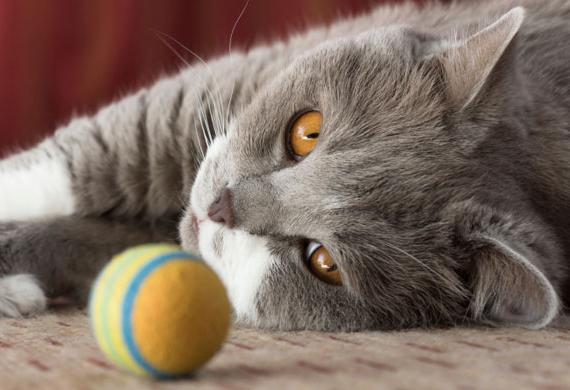 Якщо у кошеняти гниють очі