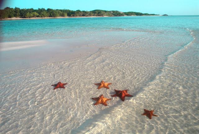 Чи є морські зірки в болгарії?