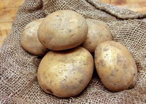 Яровизация картоплі перед посадкою