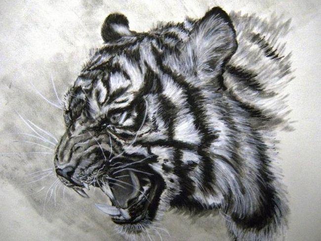 Як намалювати тигра крок за кроком