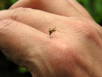 Як полегшити комарині укуси у дітей?