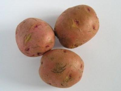Як підготувати картоплю до посадки