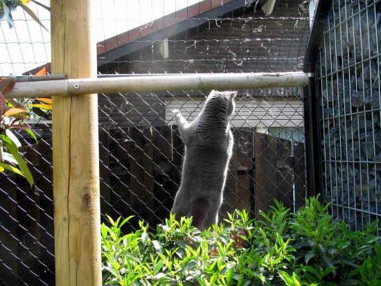 Як побудувати паркан своїми руками з сітки-рабиці