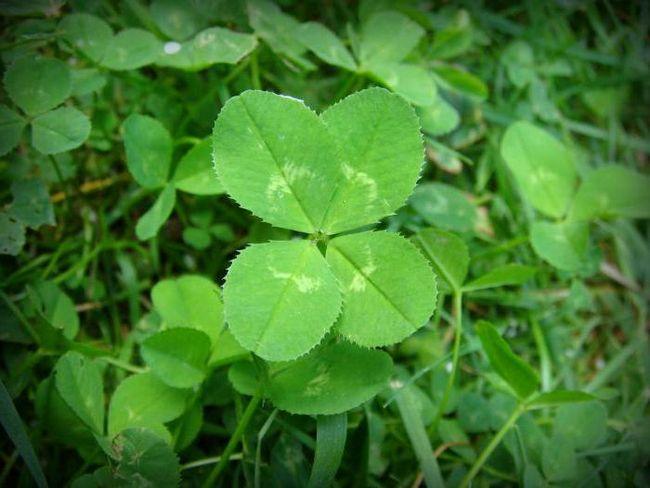 як залучити удачу і везіння