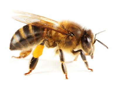 Як перевірити мед на натуральність і не купити підробку?