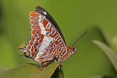 як зробити метелика з паперу своїми руками