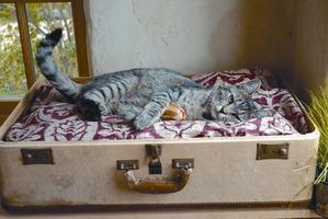 як зробити котячий будиночок