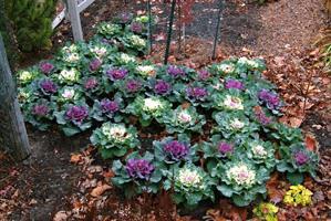 Як зробити красиву грядку на городі