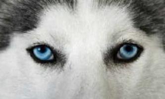 Як бачать собаки: особливості їхнього зору