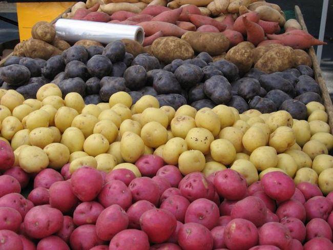 як виростити урожай картоплі
