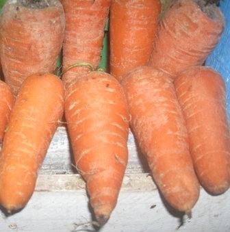 Як виростити моркву на своїй ділянці, щоб вона порадувала вас і здивувала оточуючих
