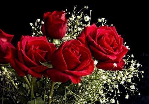 Як виростити троянду з букета, або зберігаємо красу назавжди