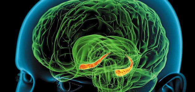 як змусити мозок працювати швидше
