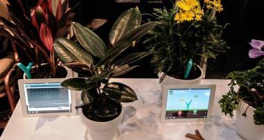 Які кімнатні рослини, які не потребують світла, вибрати?