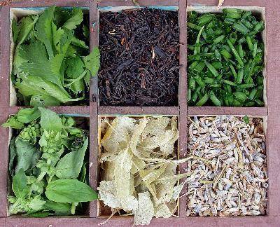 Трави для зниження апетиту