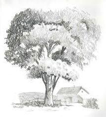 Яким має бути намальоване дерево?