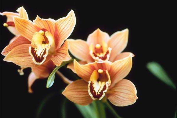 Яке потрібно добриво для орхідей