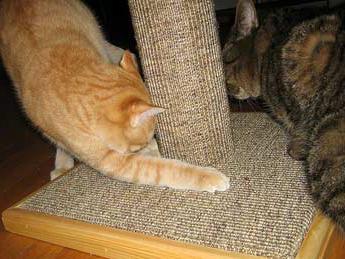 когтеточки для кішок своїми руками