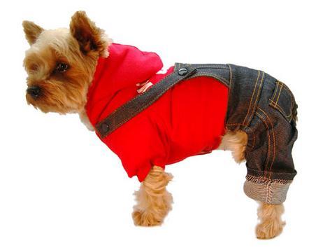 Комбінезон для собаки - необхідність чи примха господарів?