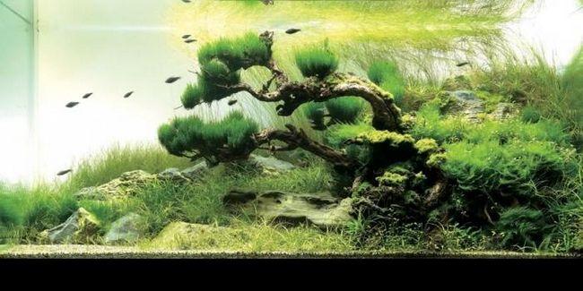 Корч для акваріума. Дизайн акваріума
