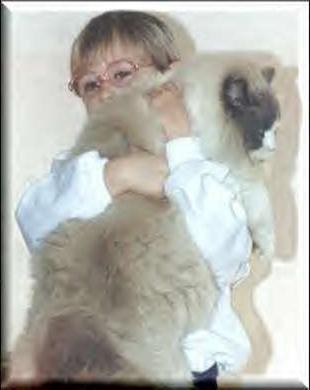 Кішки великої породи: гігантські чарівності
