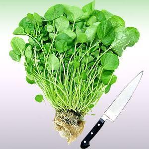 Кресс-салат: корисні властивості і простий спосіб вирощування вдома