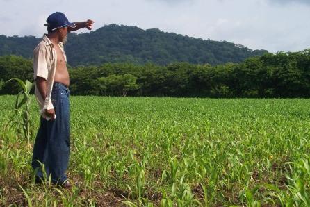 Селянсько-фермерське господарство: чи варта шкурка вичинки