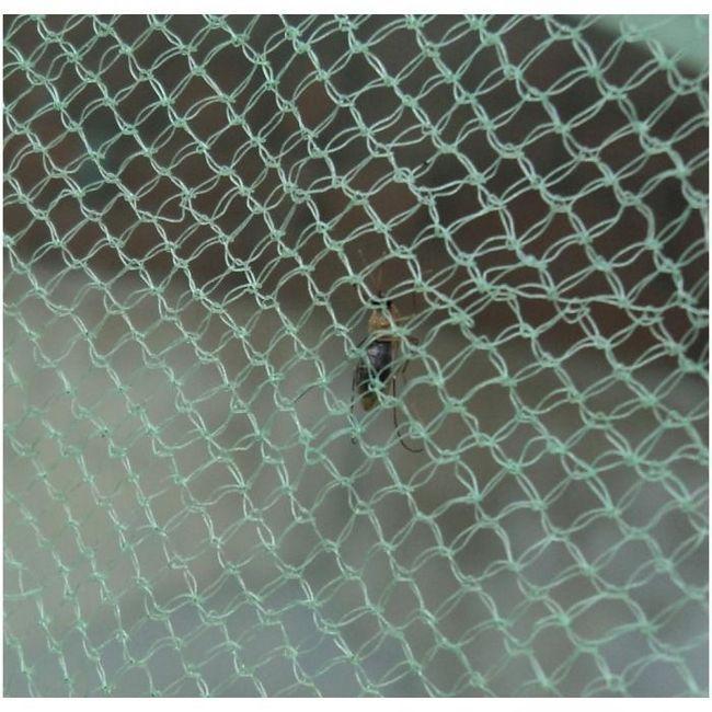 Москітна сітка на пластикові вікна: своїми руками зробити цікавіше, ніж купувати