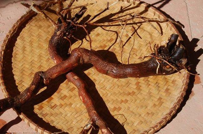 Настоянка червоного кореня: ефективний засіб від багатьох недуг