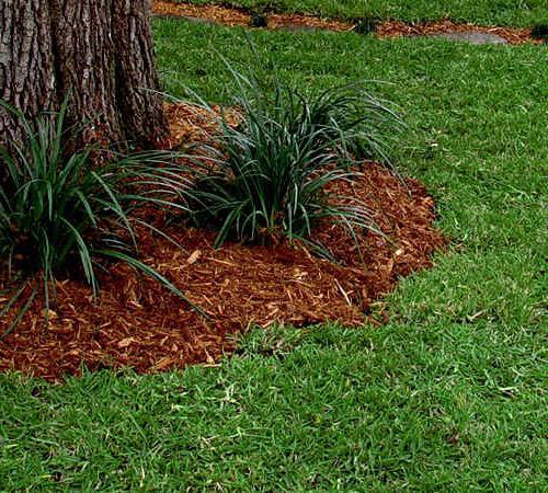 вирощування газонної трави