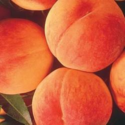 Персиковий колір особливо актуальний навесні