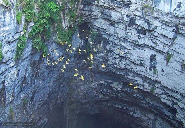 Печера ластівок - незаймана природа
