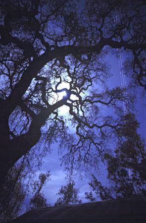 Чому не можна дивитися на місяць? Яку загрозу таїть в собі місячне світло?