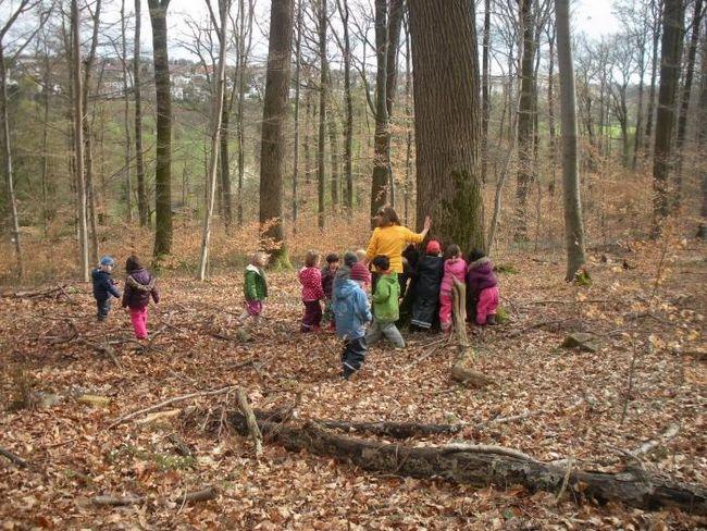 Правила безпеки, або як вести себе в лісі