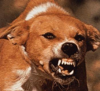 Ознаки сказу у собаки: симптоматика, лікування