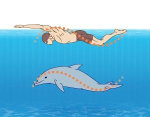 Найефективніша техніка - плавання батерфляєм
