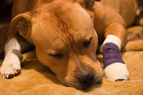 Симптоми ентериту у собак і його лікування