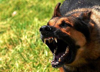 Сонник: злий собака - тлумачення сновидінь