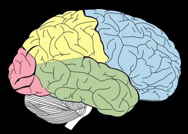 анатомія мозку людини