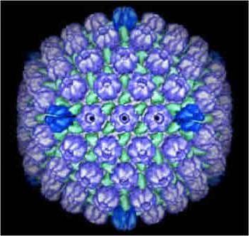 Вірус ейнштейна-барра: причини виникнення, симптоми і лікування