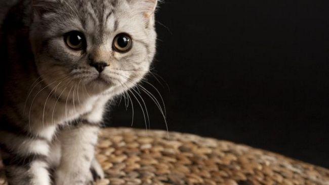 Вибираючи імена для кішок-дівчаток, слід дотримуватися опеределения правила