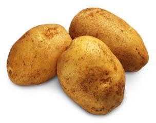 картопля, вирощування за голландською технологією