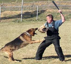 Захист від собаки: методи