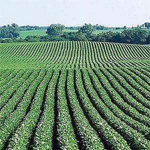 землі сільгосппризначення