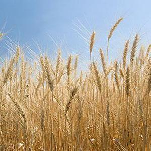 оренда землі сільгосппризначення